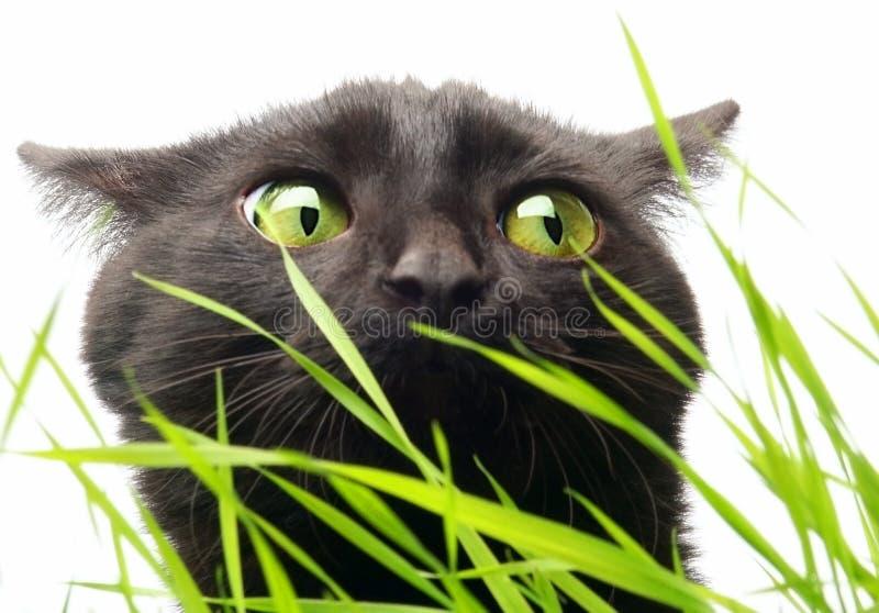 Γάτα & χλόη στοκ εικόνες