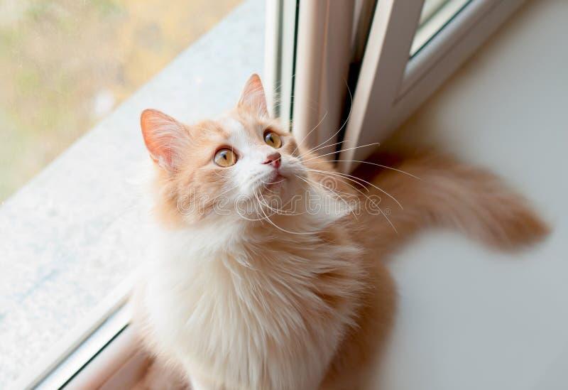 γάτα χνουδωτή στοκ εικόνα