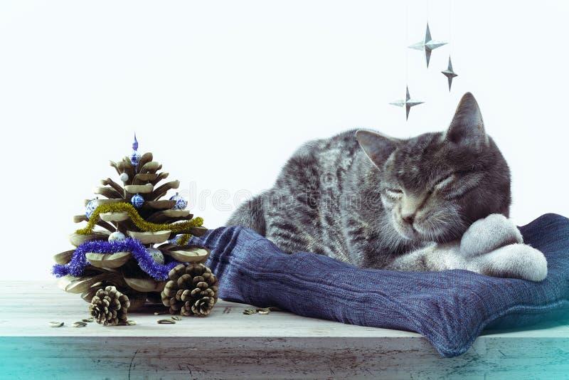 Γάτα ύπνου με τον κώνο πεύκων ως νέα σύνθεση έννοιας δέντρων έτους στοκ εικόνα