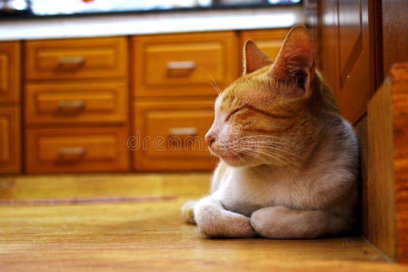 Γάτα ύπνου στην κουζίνα στοκ φωτογραφία με δικαίωμα ελεύθερης χρήσης