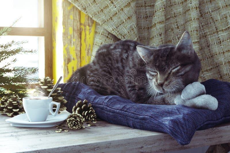 Γάτα ύπνου στη σύνθεση έννοιας υποβάθρου χειμερινών παραθύρων στοκ φωτογραφία με δικαίωμα ελεύθερης χρήσης