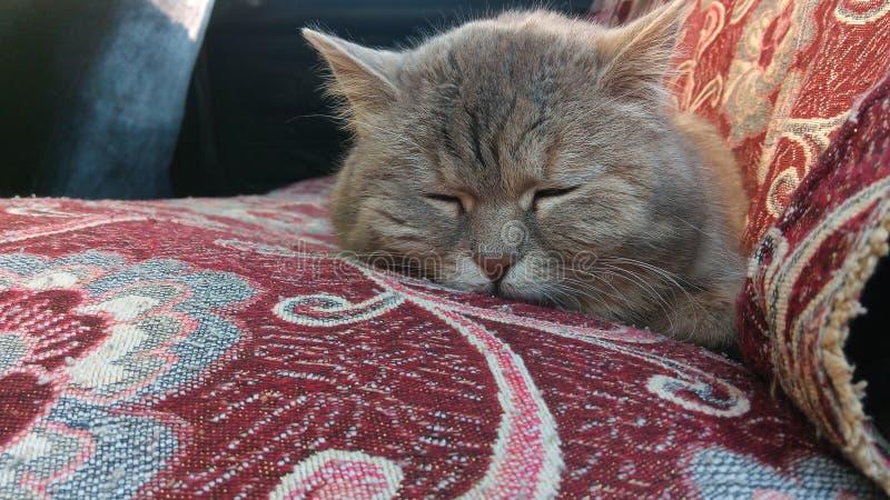 Γάτα ύπνου στο αυτοκίνητό μου στοκ φωτογραφίες