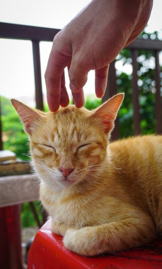 Γάτα ύπνου στο ολλανδικό τετράγωνο Malacca στην πόλη, Μαλαισία στοκ εικόνες