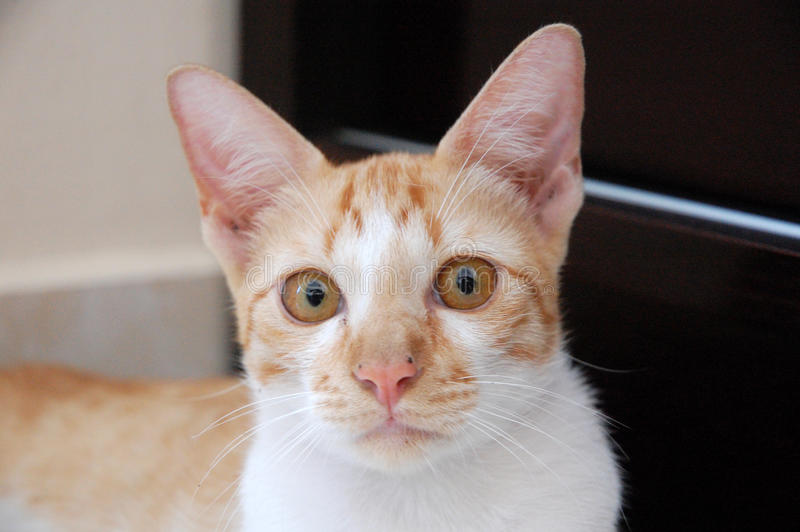 Download γάτα στοκ εικόνες. εικόνα από χαριτωμένος, μάτια, γατάκι - 13181040