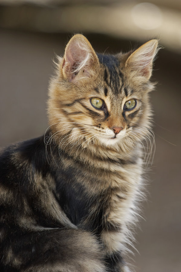 Download γάτα στοκ εικόνα. εικόνα από γάτα, καθισμένος, περίεργος - 379889