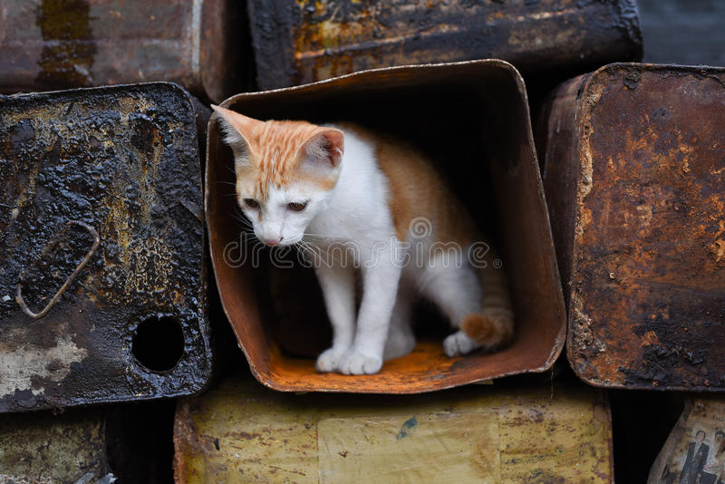Γάτα στοκ εικόνες