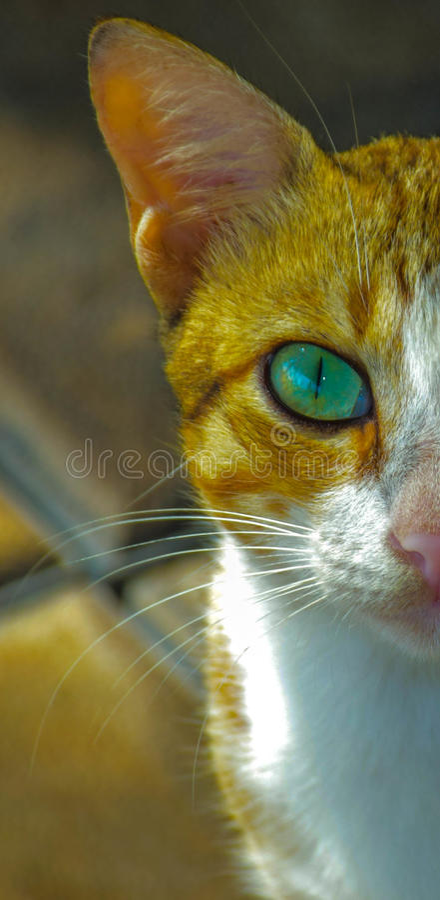 Γάτα στοκ εικόνα με δικαίωμα ελεύθερης χρήσης