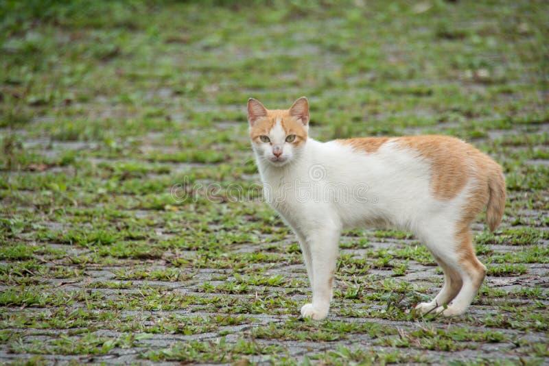 Γάτα alishan σε mountian στοκ εικόνες