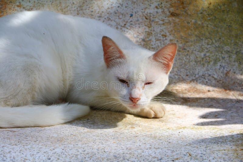 Γάτα Alonly στο εξωτερικό σπίτι στοκ φωτογραφία με δικαίωμα ελεύθερης χρήσης