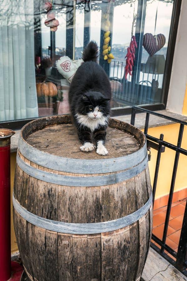 Γάτα Castel Gandolfo στοκ εικόνες