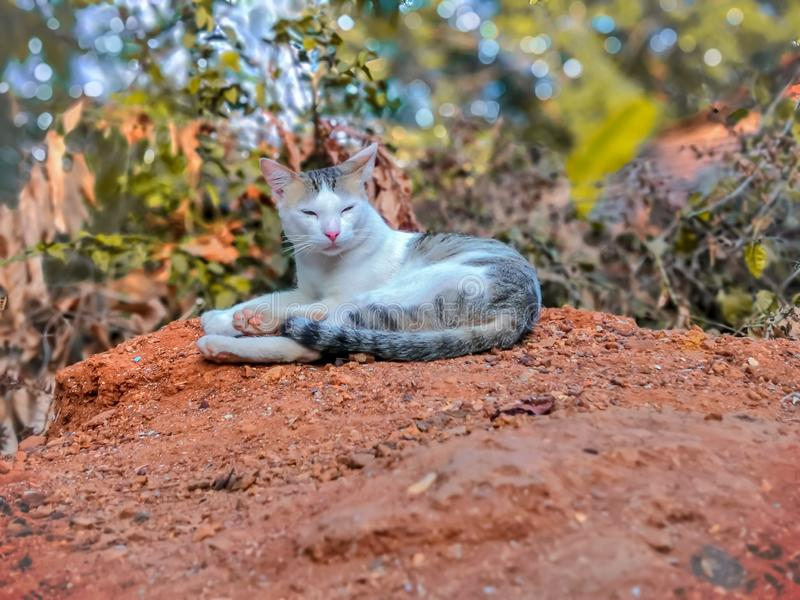 Γάτα Dozing και Conforalone πάρει για να κοιμηθεί σε λασπωμένο μέρος στοκ φωτογραφίες
