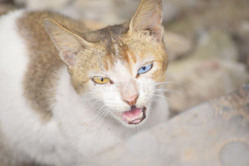 γάτα eyed στοκ εικόνα με δικαίωμα ελεύθερης χρήσης
