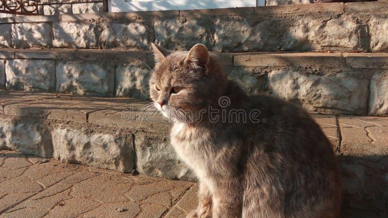 Γάτα Greya στα σκαλοπάτια στοκ φωτογραφίες
