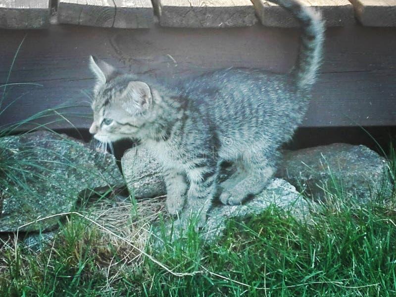 Γάτα Lolli στοκ εικόνες με δικαίωμα ελεύθερης χρήσης