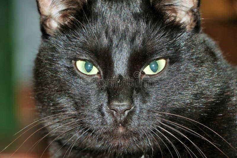 γάτα Marsik, κινηματογράφηση σε πρώτο πλάνο απεικόνιση αποθεμάτων