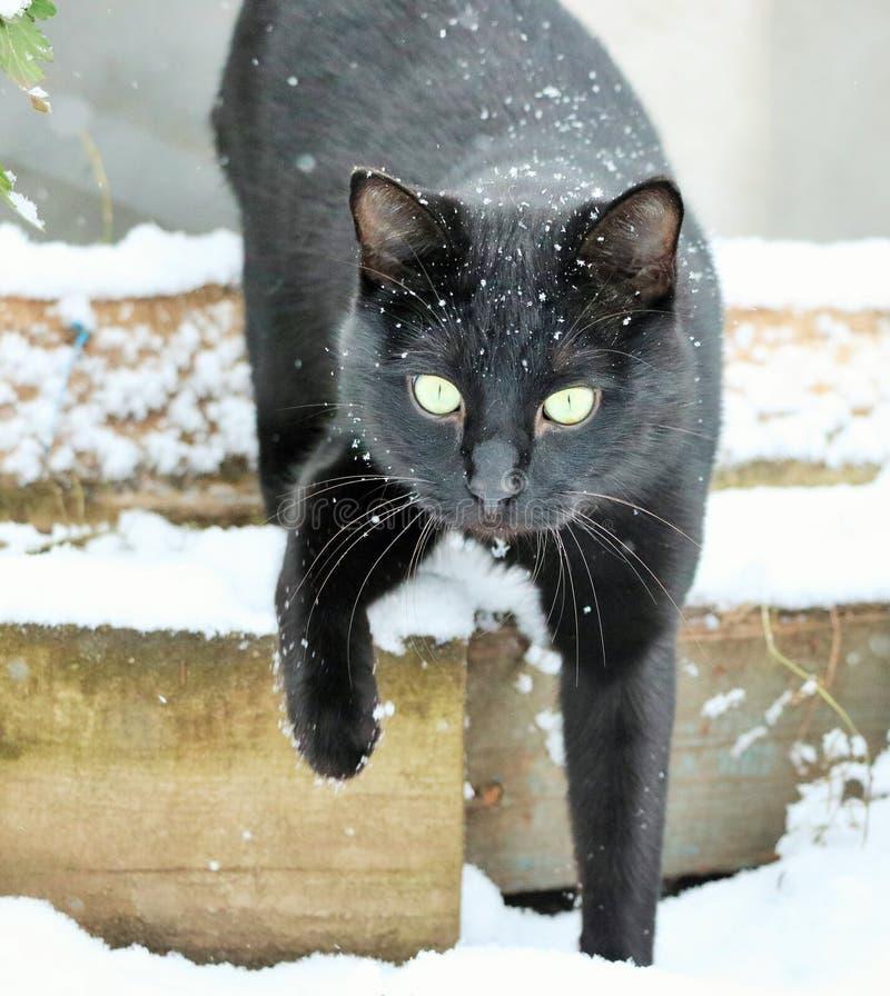Γάτα Marsik στο πρώτο χιόνι στοκ εικόνες