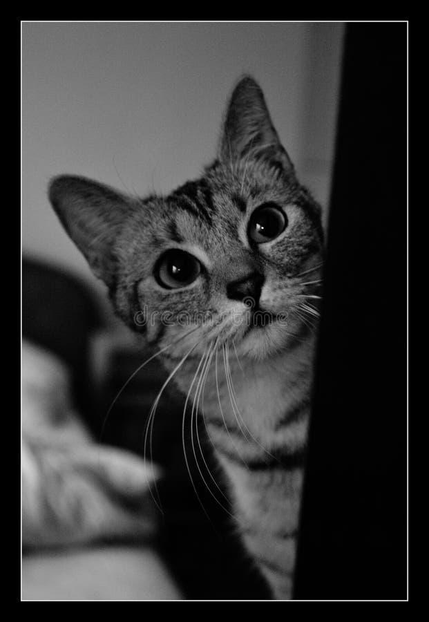 Γάτα Noya στοκ φωτογραφίες