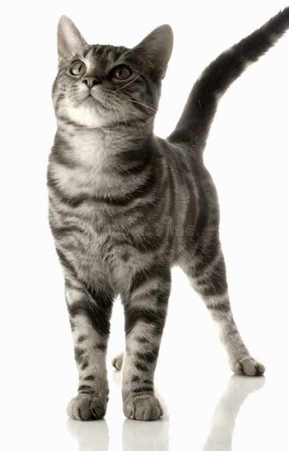 Γάτα PET στοκ φωτογραφία με δικαίωμα ελεύθερης χρήσης