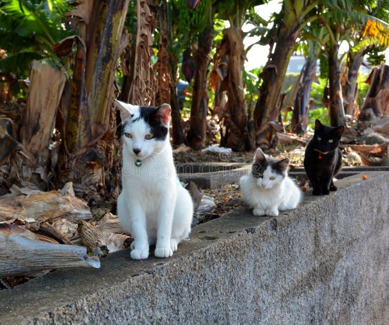 Γάτες έξω για έναν περίπατο στοκ φωτογραφία