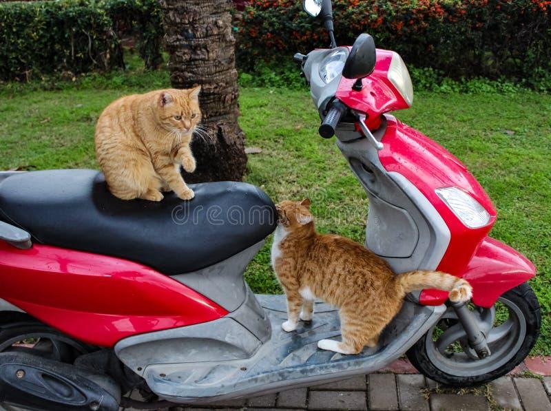 Γάτες και μηχανή στοκ εικόνες