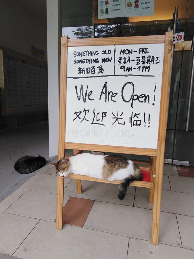 Γάτες και πινακίδα ύπνου στοκ φωτογραφίες