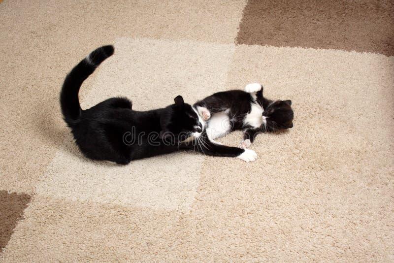 γάτες μικρές στοκ φωτογραφία