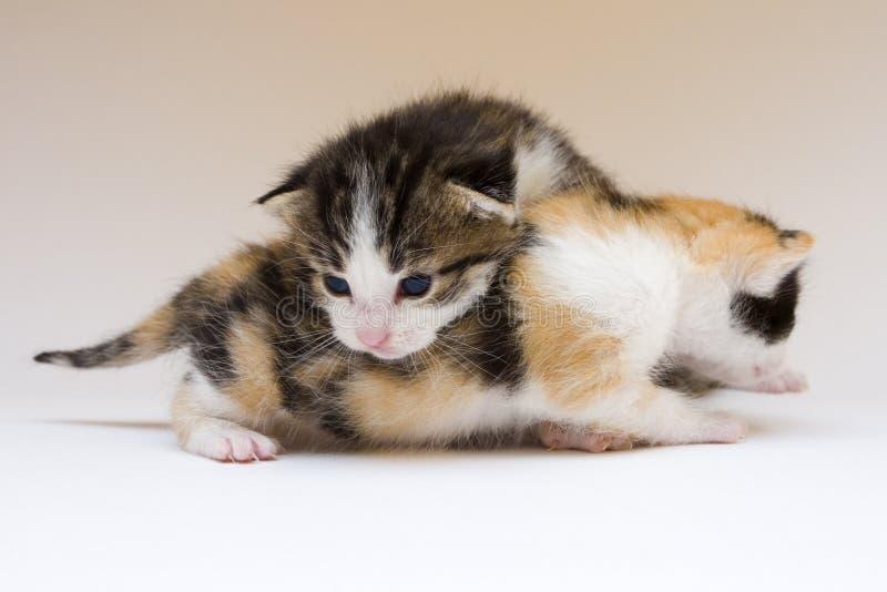 γάτες μικρές στοκ φωτογραφία με δικαίωμα ελεύθερης χρήσης