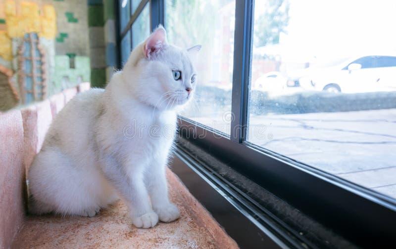 Γάτες μόνες σε ένα όμορφο δωμάτιο και χαριτωμένο έναν χνουδωτό στοκ φωτογραφίες