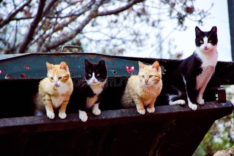Γάτες οδών που ψάχνουν μια απόλαυση στοκ εικόνες