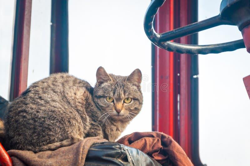 Γάτες οδών στο ναυπηγείο, ένα άστεγο ζώο στοκ φωτογραφία