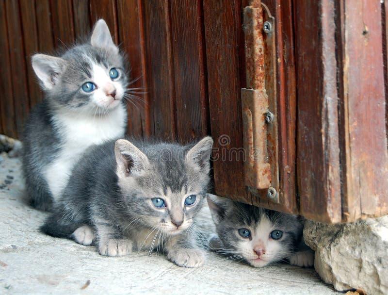 γάτες πανέμορφες λίγα τρία στοκ εικόνα