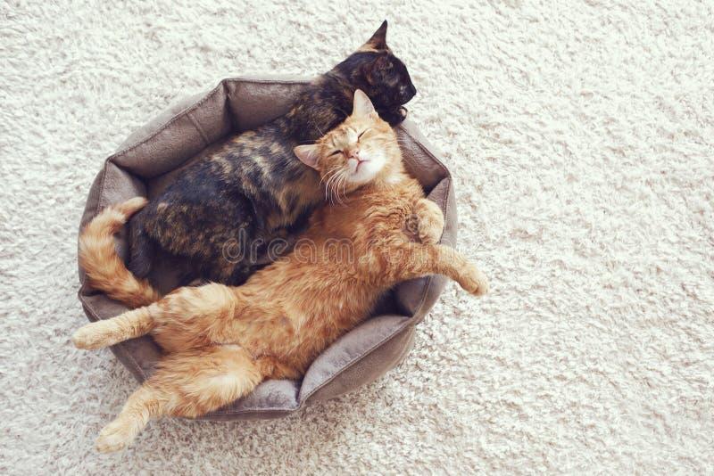 Γάτες που κοιμούνται και που αγκαλιάζουν στοκ φωτογραφία με δικαίωμα ελεύθερης χρήσης