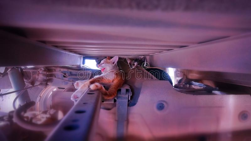 Γάτες που κολλιούνται κάτω από τη μηχανή αυτοκινήτων στοκ εικόνες με δικαίωμα ελεύθερης χρήσης
