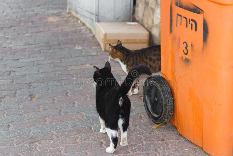Γάτες σε μια οδό στο Τελ Αβίβ στοκ φωτογραφίες