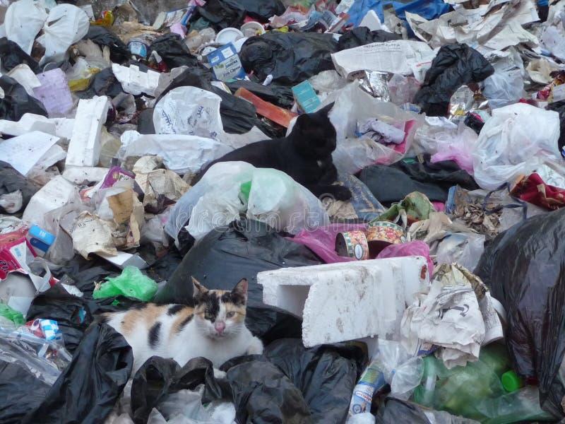 Γάτες στα σκουπίδια στοκ εικόνα