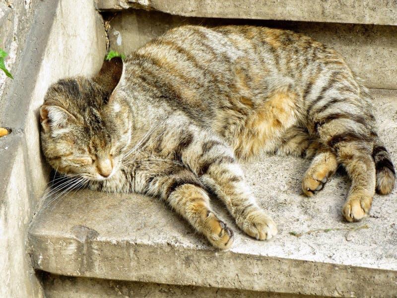 Γάτες στη Ρώμη στοκ φωτογραφία