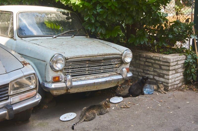 Γάτες στη Σερβία στοκ εικόνες
