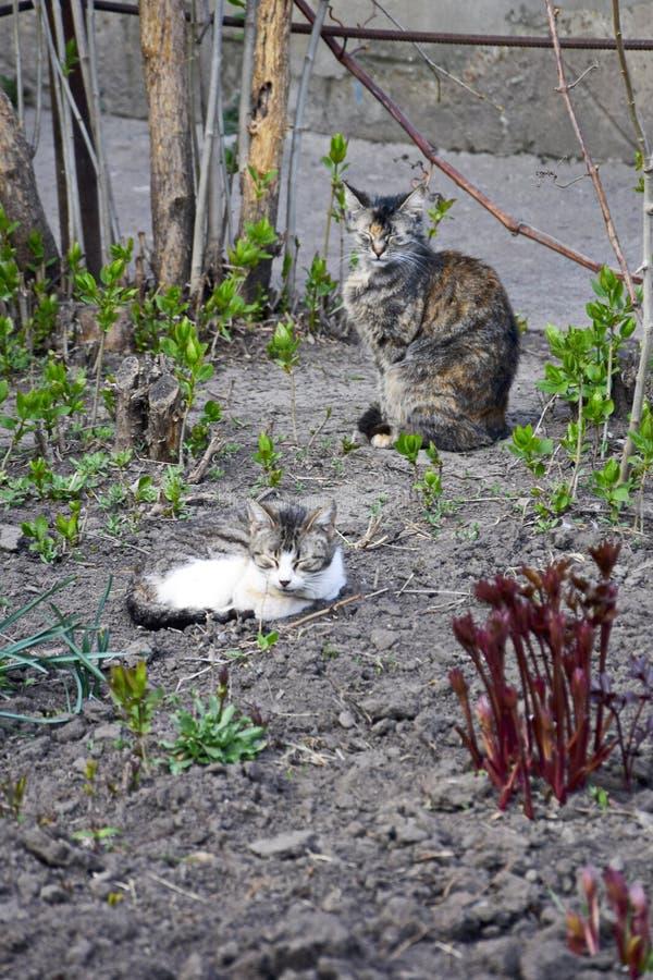 Γάτες ύπνου Η γκρίζα νέα γάτα κατσάρωσε επάνω στο έδαφος στοκ εικόνα