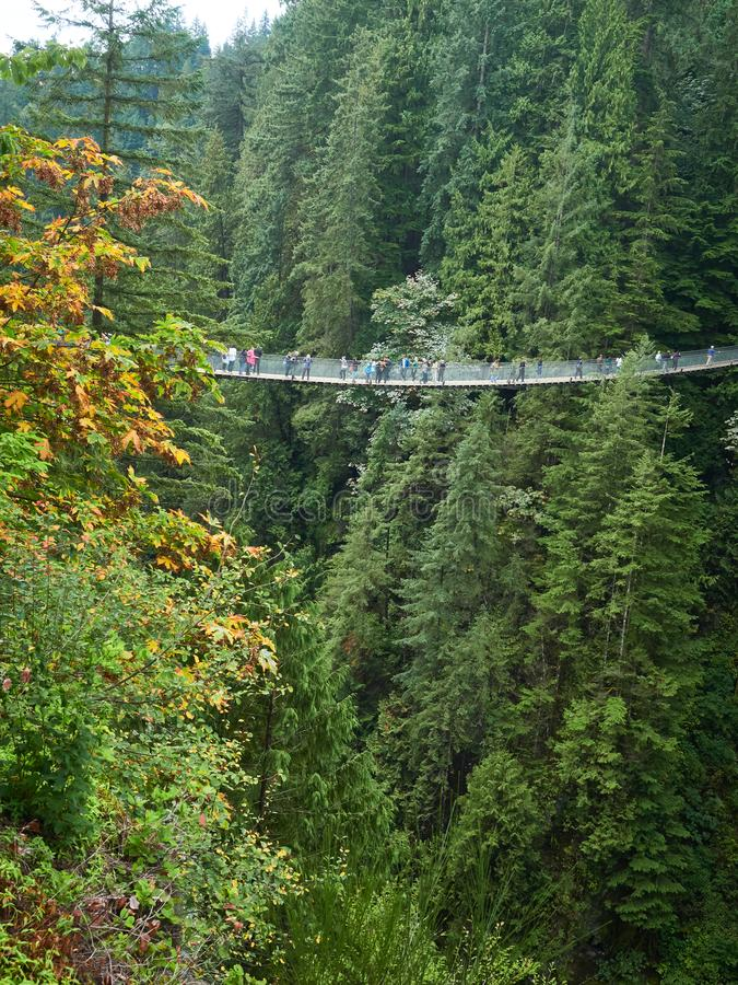 Γέφυρα αναστολής πέρα από το δάσος κοιλάδων Capilano στο Βανκούβερ Καναδάς με τα μέρη των ανθρώπων στοκ φωτογραφία με δικαίωμα ελεύθερης χρήσης
