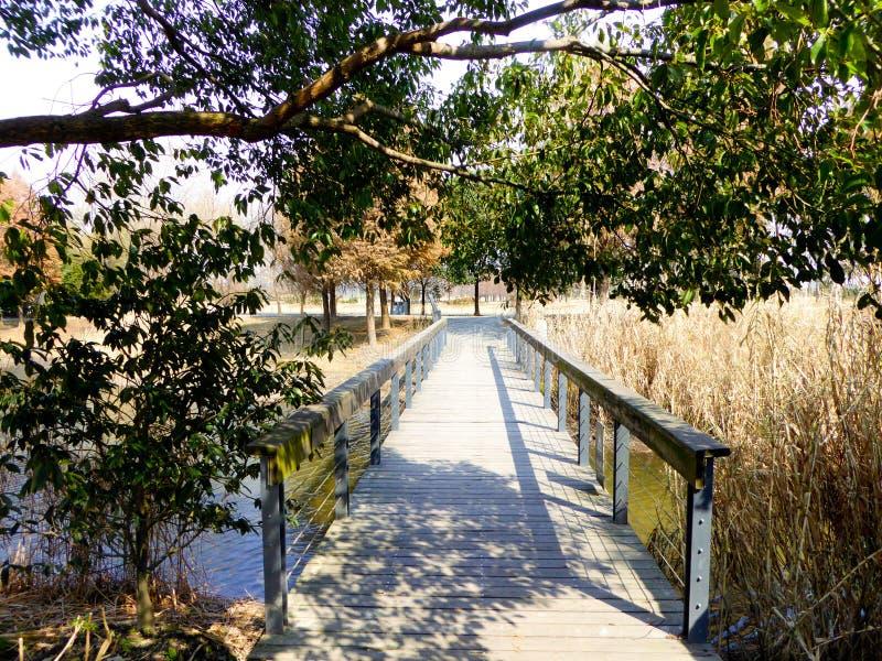 Γέφυρα βοτανικών κήπων της Σαγκάη Chen Shan στοκ φωτογραφία