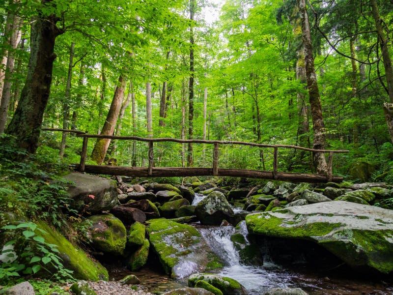 Γέφυρα κούτσουρων πέρα από το δασικό κολπίσκο, πολύβλαστα ξύλα στοκ φωτογραφία με δικαίωμα ελεύθερης χρήσης