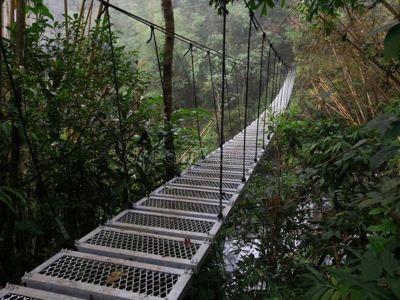 Γέφυρα πέρα από τον ποταμό στο δάσος στοκ φωτογραφίες
