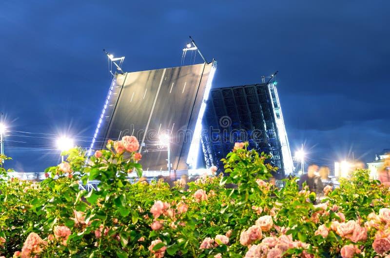 Γέφυρα παλατιών νύχτας στα ανθίζοντας τριαντάφυλλα και τα φωτεινά φω'τα Αγία Πετρούπολη πρώτου πλάνου στοκ φωτογραφίες