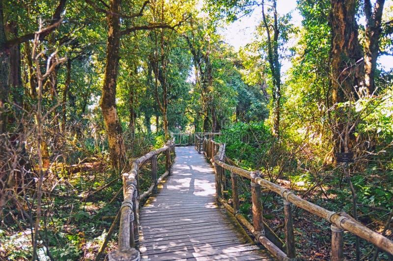 Γέφυρα στη ζούγκλα, εθνικό πάρκο Khao Yai, Chiang-chiang-maj στοκ φωτογραφία