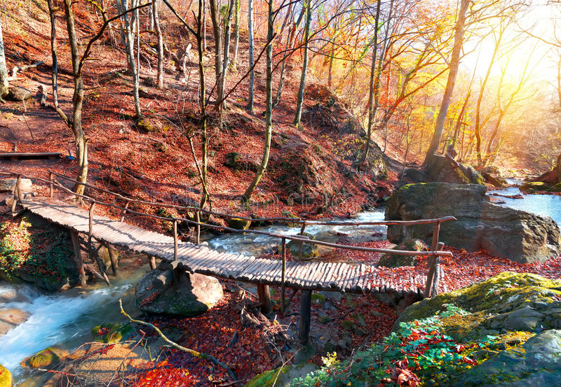 Γέφυρα στο δάσος στοκ εικόνα