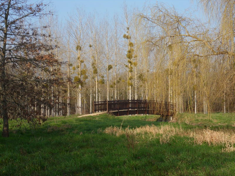 Γέφυρα στο πάρκο στοκ φωτογραφία με δικαίωμα ελεύθερης χρήσης