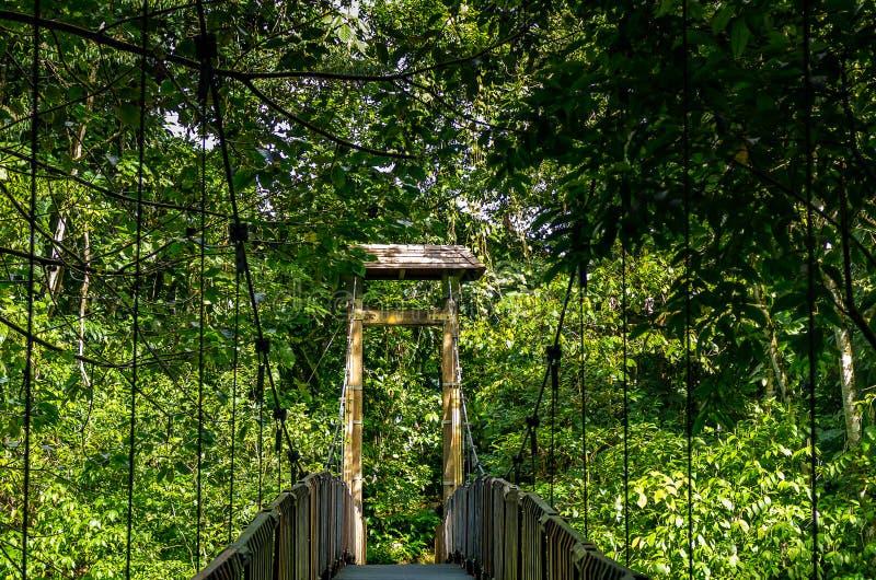Γέφυρα στο τροπικό δάσος, Γουαδελούπη στοκ εικόνες