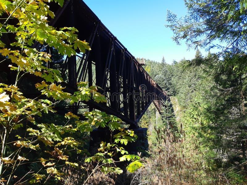 Γέφυρα στυλ καντουλίβερ στο δάσος στοκ φωτογραφία με δικαίωμα ελεύθερης χρήσης