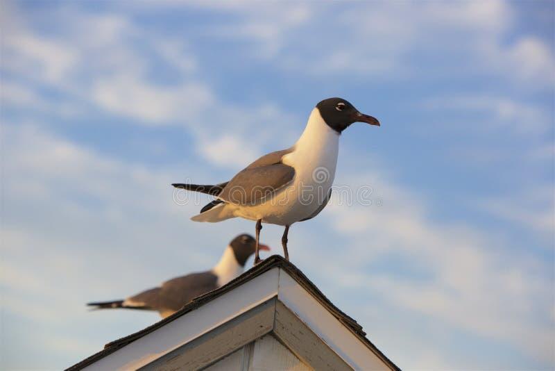 Γέλιο επάνω στη στέγη στοκ φωτογραφία