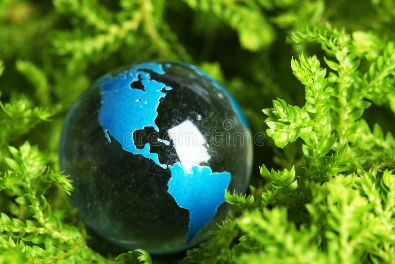 γήινο μαρμάρινο φυτό στοκ φωτογραφία με δικαίωμα ελεύθερης χρήσης